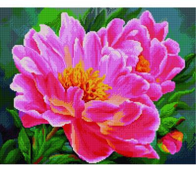 Распустившийся цветок 40*50